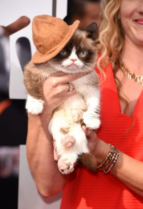 grumpy-cat-mtv-movie-awards-2014-red-carpet-pharell-hat-h724